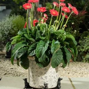 Jack Russell Terrier Plant Pot Feet – Set of 3