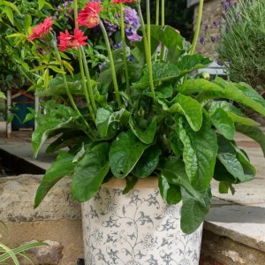 Butterfly Plant Pot Feet – Set of 3