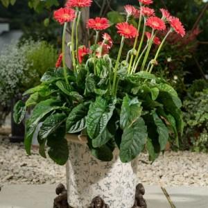 Orangutan Plant Pot Feet – Set of 3