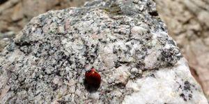 Introduction climbing, discover rock climbing, rock climbing guide, rock climbing for beginners