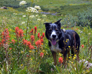 dogs in crested butte