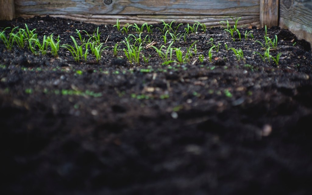 As the Worm Turns: Garden Karma—Lessons Learned
