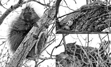 The Crestone Eagle: February 2015