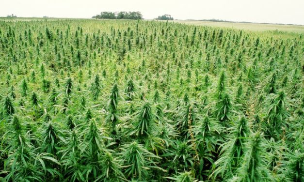 Is hemp the valley's crop of the future? Part 1