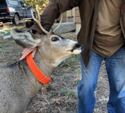 Franktown man attacked by deer that was suspected to be hand-raised by people