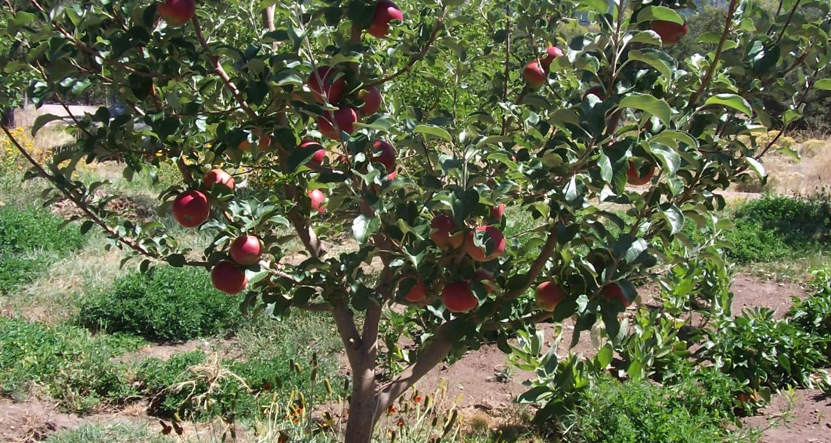Garden Guru: More About Trees