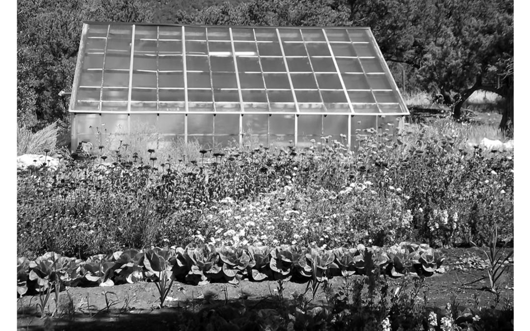 Garden Guru: Green Earth Farm – the new garden