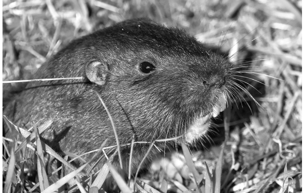 Garden Guru: Those four-footed rodents