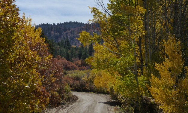 Prime locations to view fall colors by foot or car