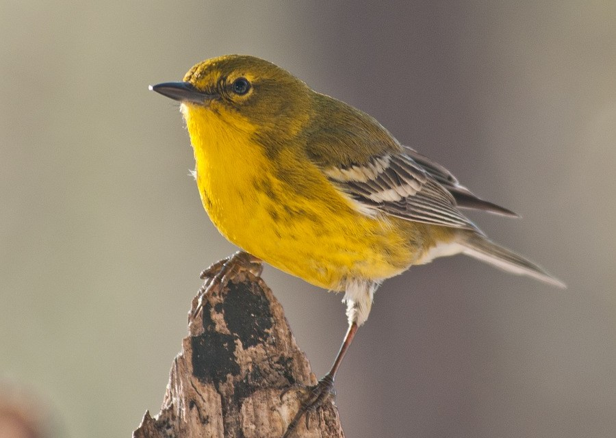 Thousands of birds drop dead across the southwest in perplexing die-off