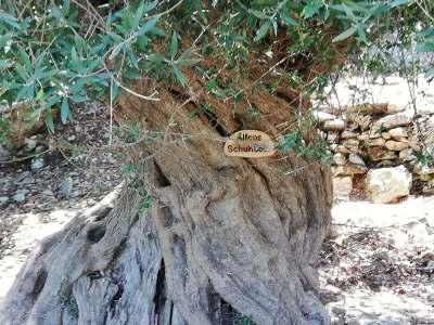 Olivenbaum Schild Schuhbeck