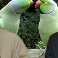 Ο Διονύσης Χιόνης εξαφανίζει τα άθλια παπαγαλάκια που μάχονται την δραχμή!!!