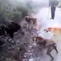 Αυτά τα καθάρματα, αυτoύς τους ισλαμοκανιβάλους μας κουβάλησαν στη πατρίδα μας...  Δείτε τον φρικτό τρόπο που σκοτώνουν τα σκυλιά!