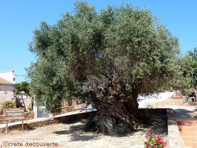 https://i0.wp.com/crete.decouverte.free.fr/Vouves-musee-olive-et-olivier.jpg