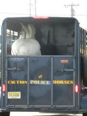 Bye Bye Police Horsie