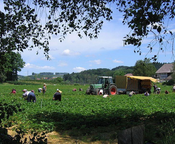 Traktor landwirtschaft