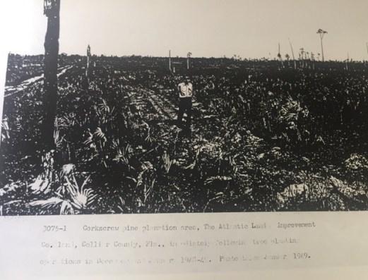Bob Byrd in logged area 1949
