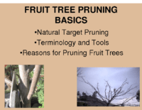 Fruit Tree Pruning Basics Presentation