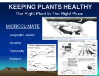 KEEPING PLANTS HEALTHY Presentation