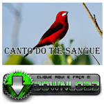 Canto do Tiê Sangue