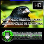 canto curio praia classico download gratis