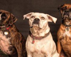 Raças caninas: entenda como elas surgiram