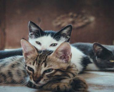 Raças de gato: confira detalhes das origens da espécie