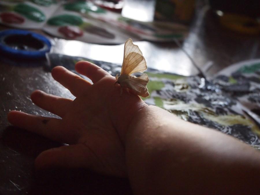 Niño con mariposa en la mano