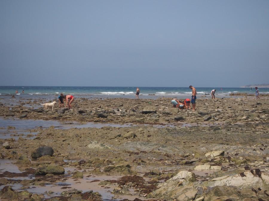 Observando crustáceos y otros bichos con niños  en las rocas de los pinos de Tarifa