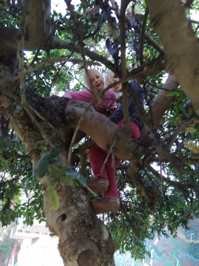 Niñas en la copa de árbol escalando