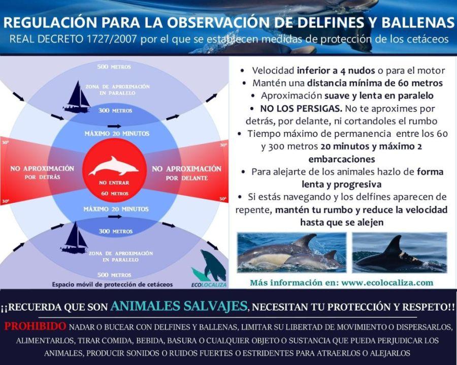 Regulacion de observación de cetaceos. Explica que hacer y que no hacer para avistamientos respetuosos