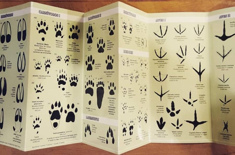 Interior de la guia de campo para niños de  huellas de Tunndra Ediciones