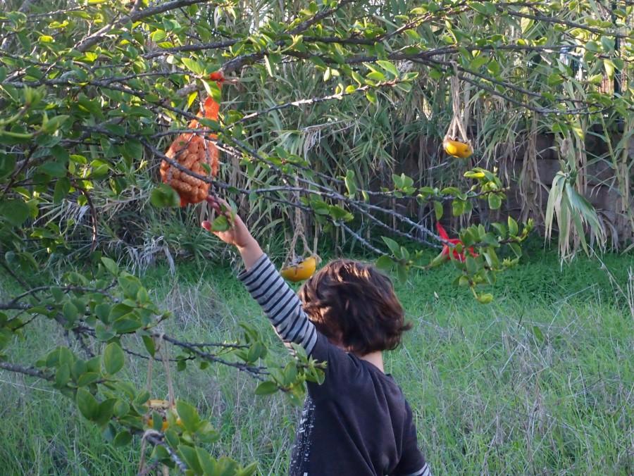 Nico colocando los comeros en el árbol