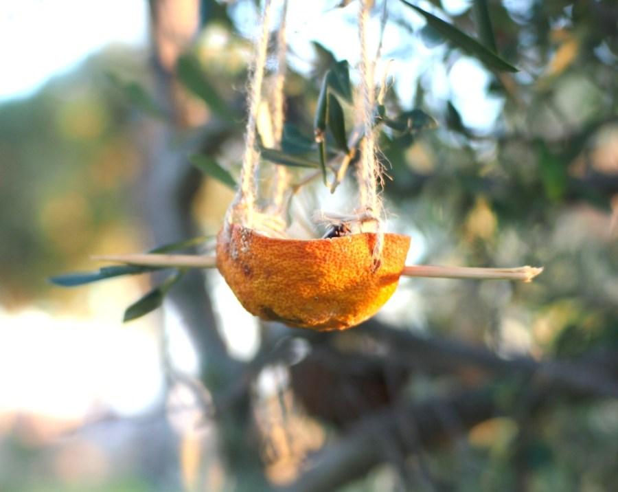 Cesta naranja  de comedero de aves