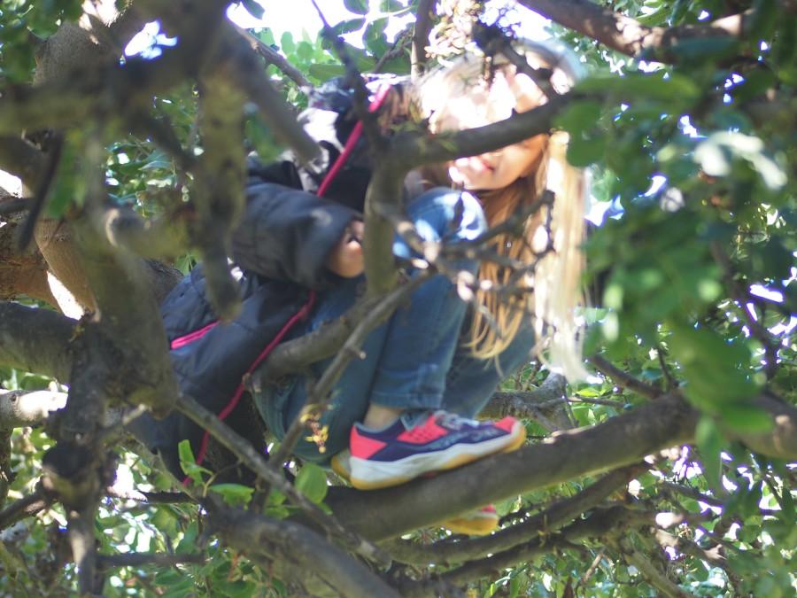 Niña en lo alto de un árbol, casi no se la ve por las ramas