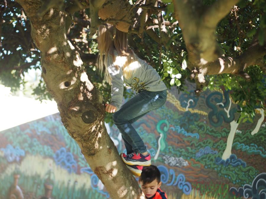Niña escalando un árbol