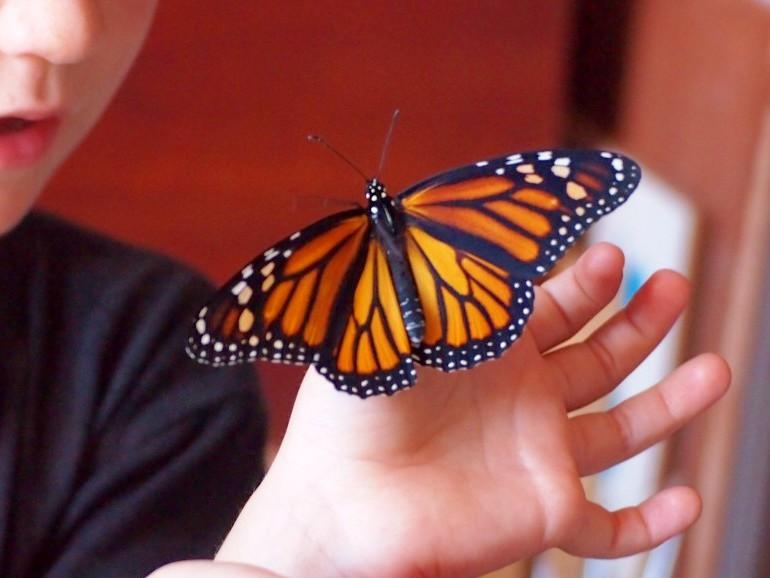 Mano de niño con mariposa monarca posada