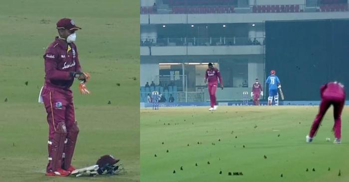 West Indies, Afghanistan, 2nd ODI,moths in Lucknow