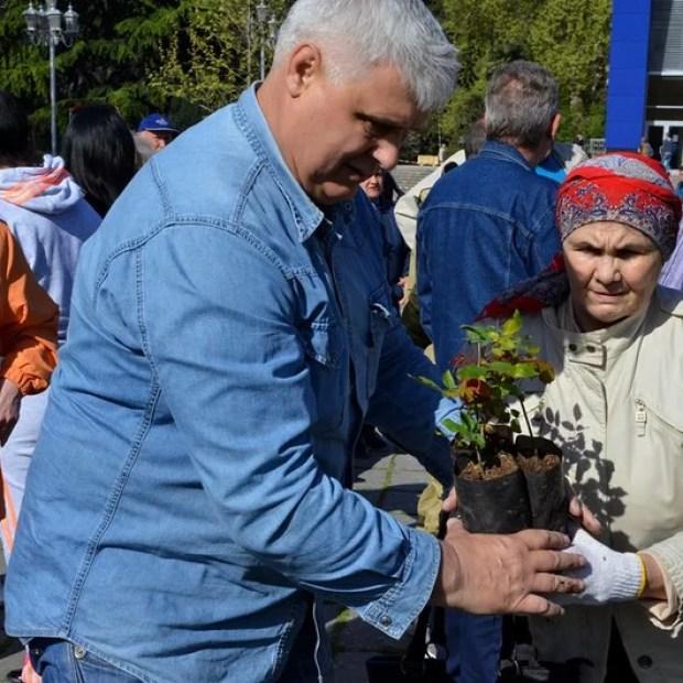 На главной площади Ялты высадили розы и можжевельник