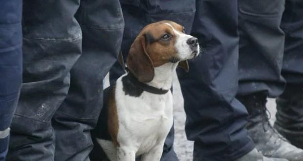 Собаки-спасатели тренировались на сборах в Крыму