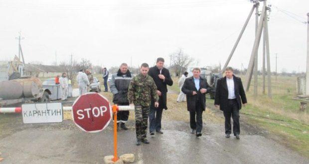 В Ленинском районе Крыма ликвидируют очаг африканской чумы свиней