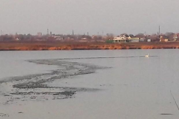 Крымские спасатели вызволили из ледового плена… лебедя