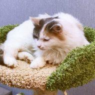 Фото: В%, Котокафе «Волшебный кот»