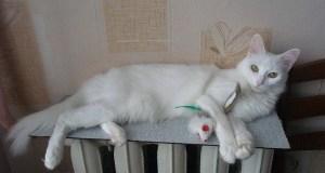 В Крыму отключают отопление