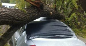 Штормовой ветер в Крыму. Под деревьями - не парковаться!