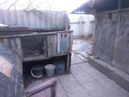 Житель Симферопольского района прятал марихуану… в клетке для кроликов
