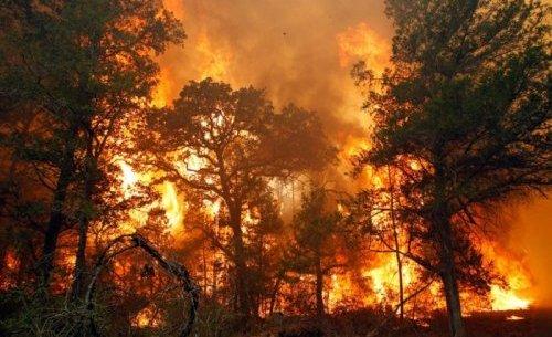 Пожароопасный период в Крыму - МЧС призывает соблюдать правила безопасности в лесах!