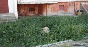 Травля собак в Керчи... Трупы оставили под окнами жилых домов