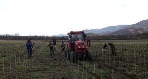 Аграриям Севастополя помогут деньгами