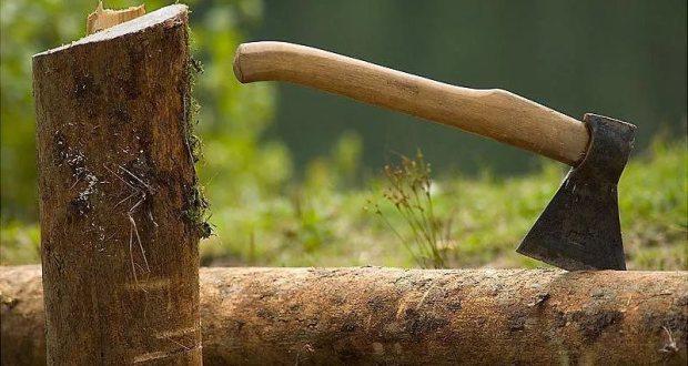 В Бахчисарайском районе незаконно рубили деревья. «Нарубили» на тюремный срок